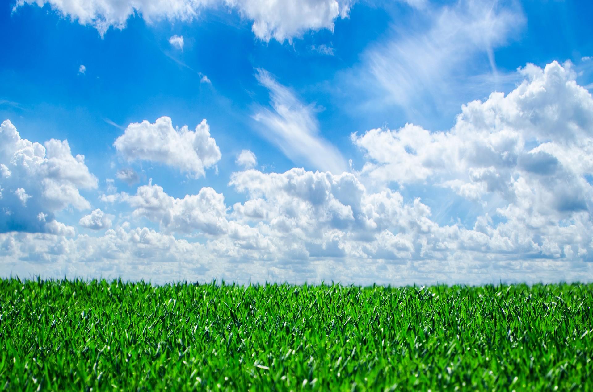 grass-and-sky-1382172028tu4